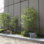 農協会館前に、新しく誕生した日本庭園。